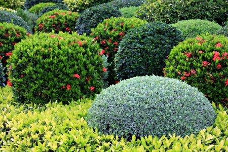 Кустарники и их применение в садовом ландшафтном дизайне
